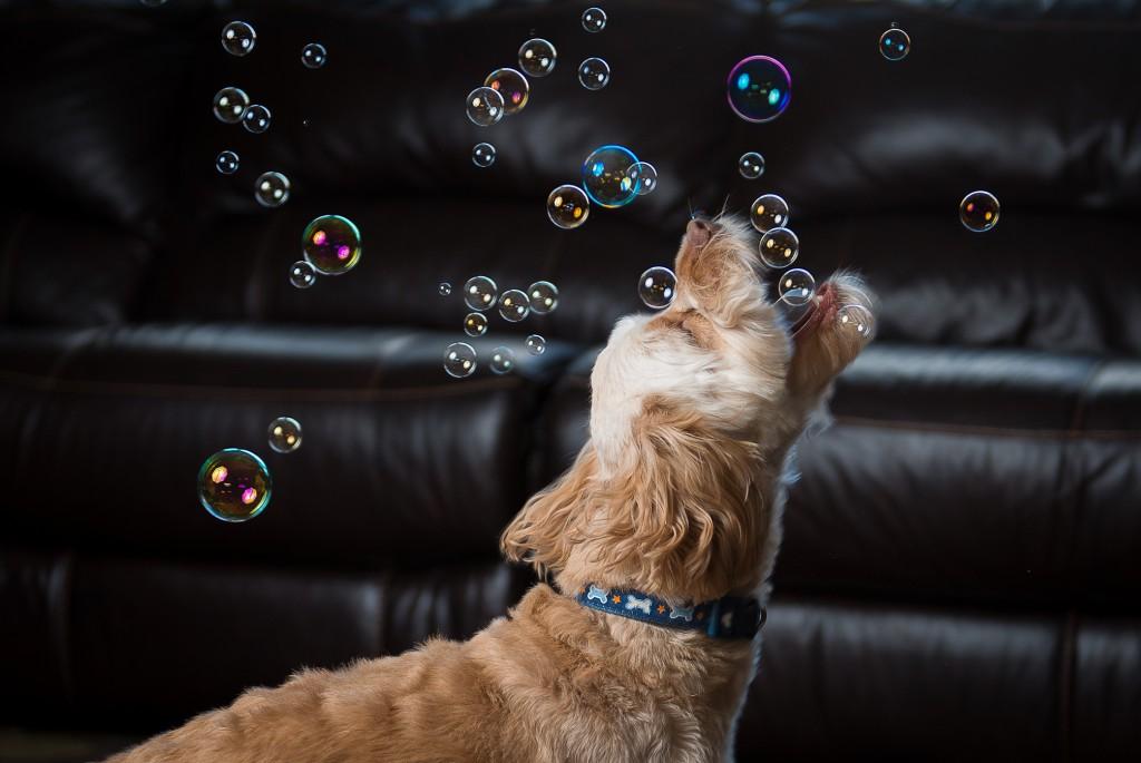 Dog Bubbles Mike Walker Mike Walker