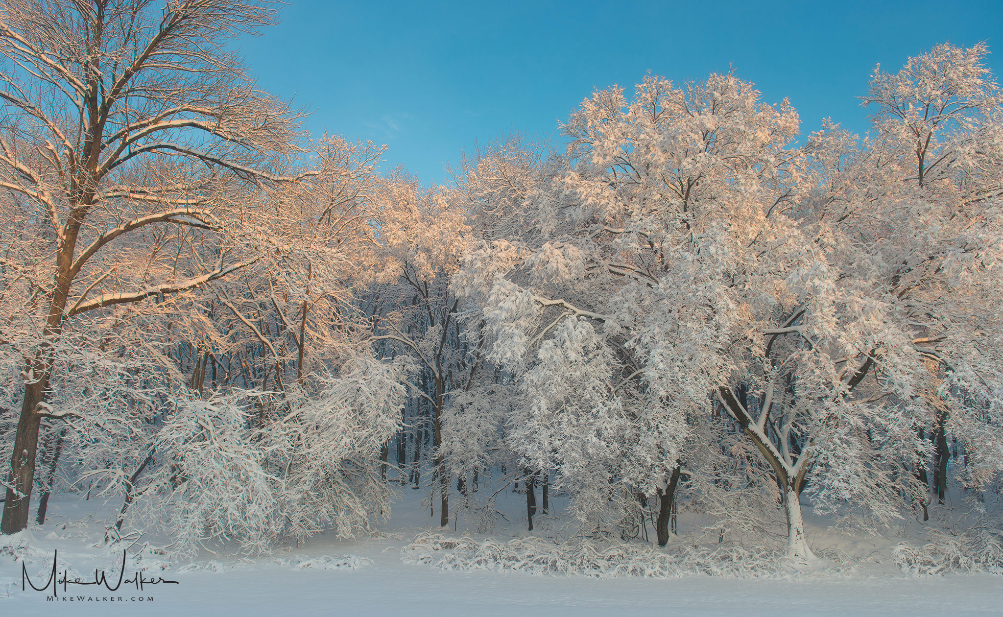 Snow and ice covering trees on a sunny morning. Nature photography by Mike Walker.
